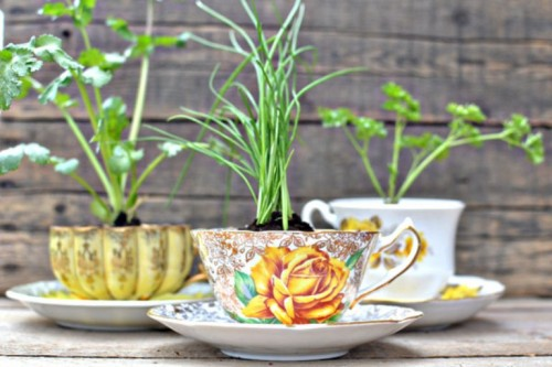 vintage cups with herbs
