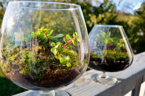 living terrariums in glasses (via anestforallseasons)