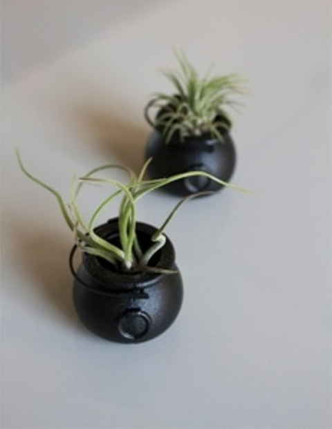 mini black caulrons with air plants look cute and scary and will be creative and cool wedding favors at Halloween