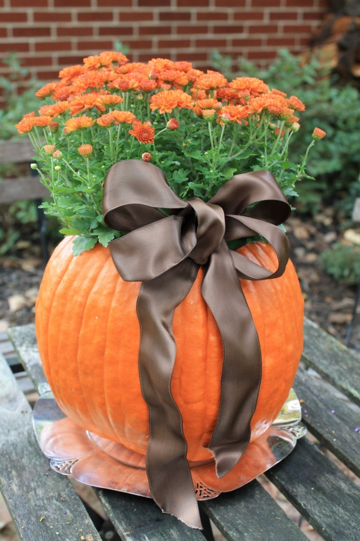 a large pumpkin planter with orange blooms and a brown ribbon bow can be a nice decoration or a centerpiece