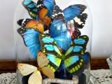 Glass jar filled with butterflies