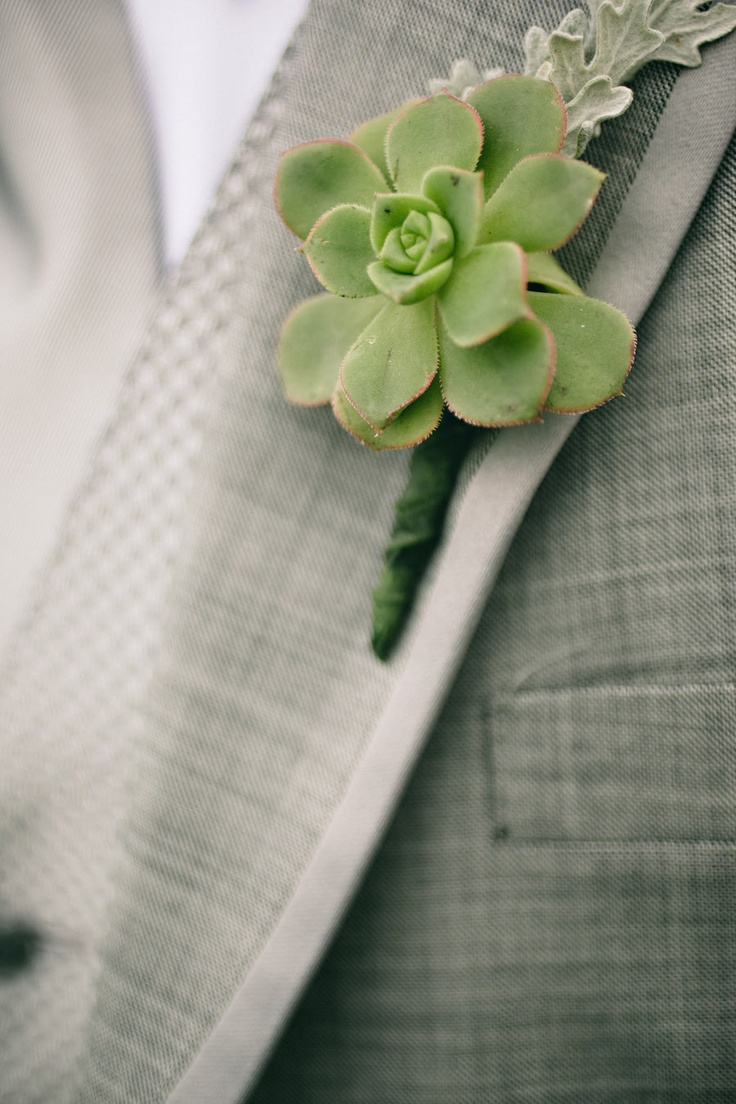a succulent and pale greenery wedding boutonniere is a chic and creative accessory