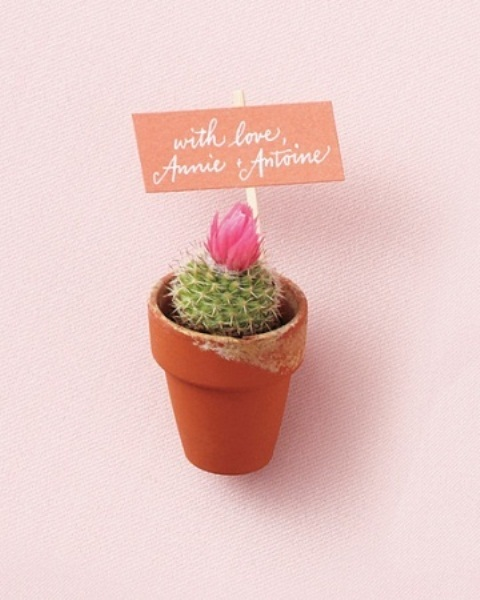 a potted blooming cactus with a topper is a nice wedding favor idea that is eco-friendly at the same time
