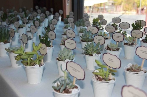 lots of potted succulents with toppers as budget-friendly and eco-friendly wedding favors