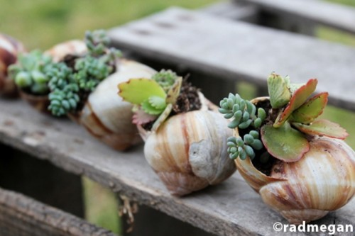 snail shells pots with succulents (via shelterness)
