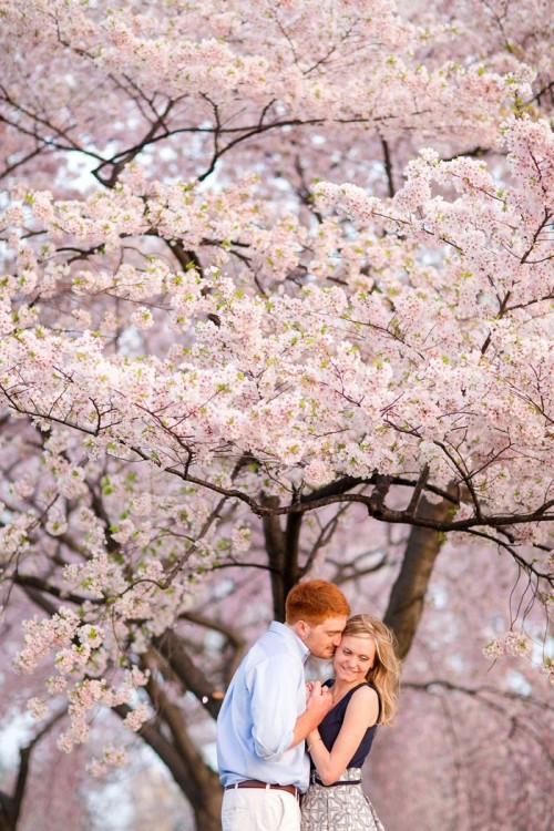 blooming cherry trees are an adorable and chic spring engagement backdrop that will take your breath away