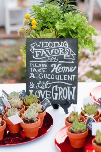 potted succulents are nice wedding favors for various weddings, succulents are very much in trend