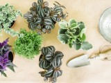 Easy Diy Living Plant Wedding Centerpieces