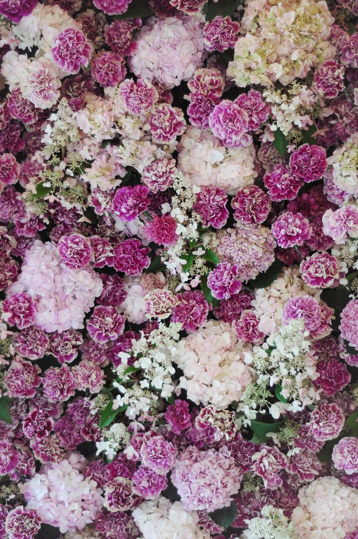 a super lush floral wall wedding backdrop with white and pink hydrangeas and fuchsia carnations