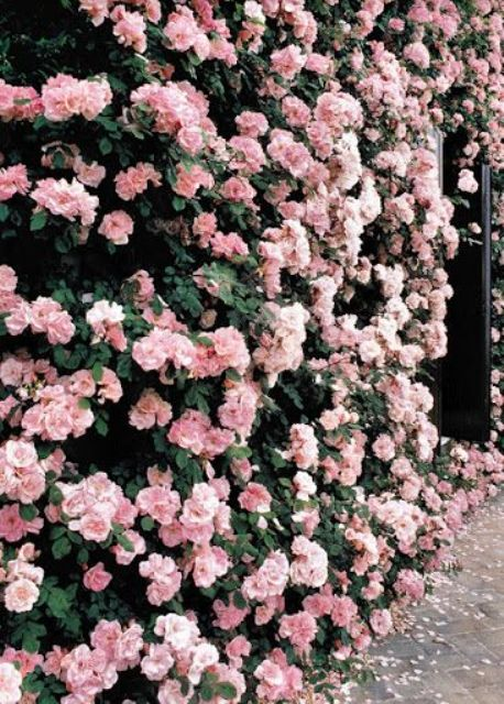 a lush pink floral wall is a fresh and beautiful living backdrop for any wedding ceremony