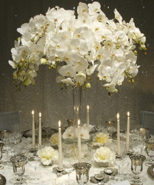 a white orchid wedding centerpiece in a tall vase is a stylish and refined idea for a wedding