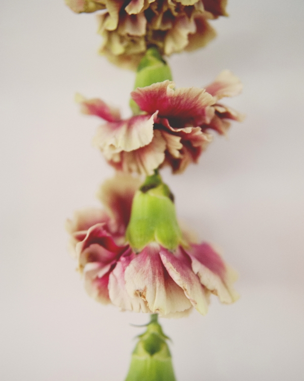 Pretty Diy Flower Garland For Your Spring Wedding Decor