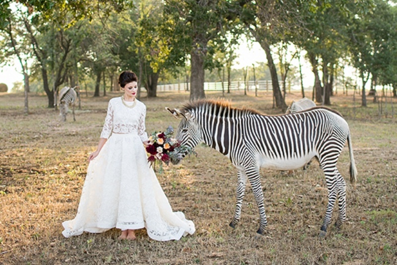 Picture Of stylish and modern safari inspired wedding with a zebra  1