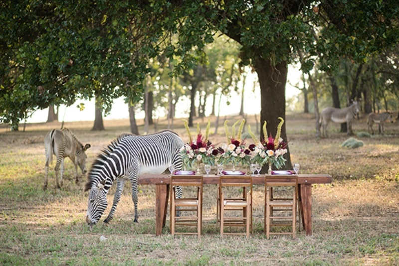 Picture Of stylish and modern safari inspired wedding with a zebra  10