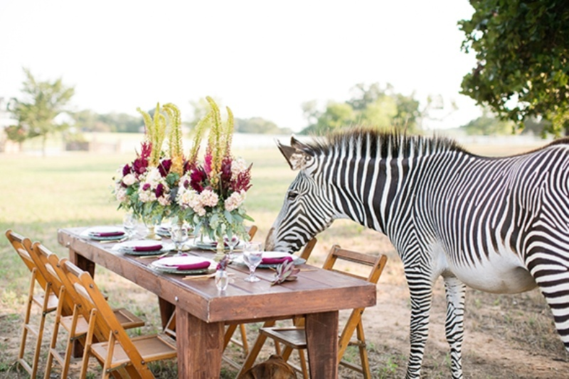 Picture Of stylish and modern safari inspired wedding with a zebra  5