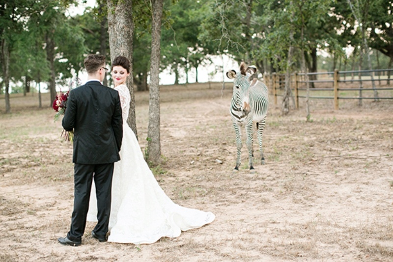 Picture Of stylish and modern safari inspired wedding with a zebra  6
