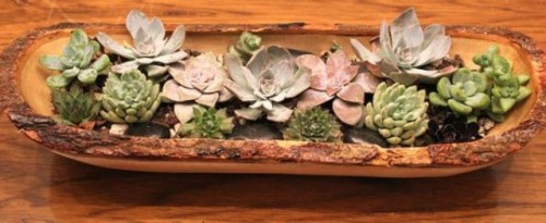 a rough wooden bowl with pale succulents is a nice wedding centerpiece for a rustic or woodland wedding