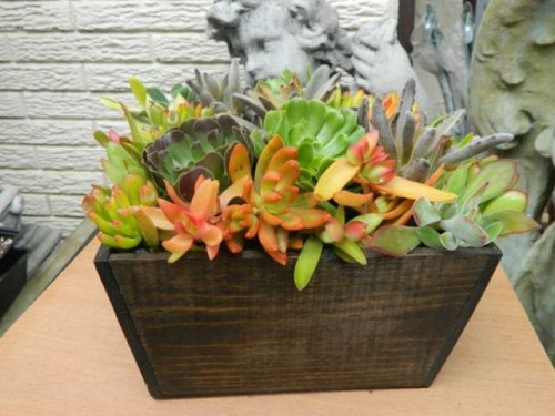 Succulent Centerpieces For Your Recepton Table