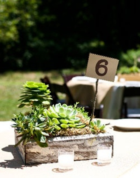 a rustic wedding centerpiece of a wooden box, moss and several large succulents plus a table number