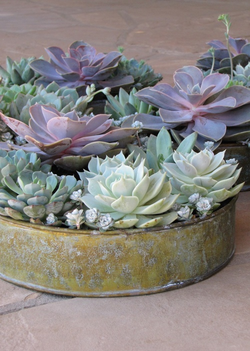 a shabby tin can planter with pale succulents and purple ones for a fresh and modern look of your reception