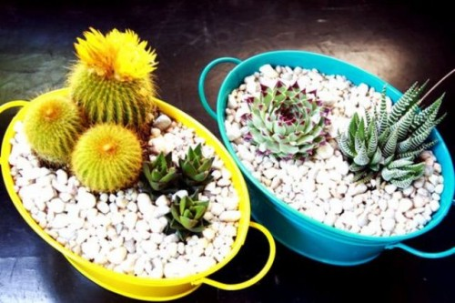 bright painted buckets with pebbles and cacti and succulents are a nice idea for a modern bright and casual wedding