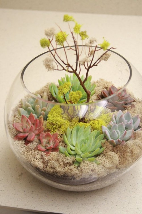 a trendy terrarium wedding centerpiece with lots of succulents, moss and branches is your natural touch to the reception