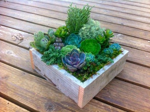 a rustic wedding centerpiece of a wooden box with lots of greenery and various succulents