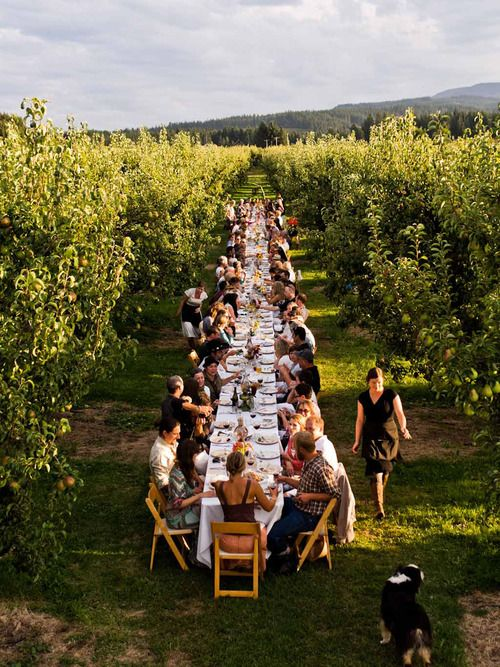 Picture of farm to fork dinner at kiyokawa family orchards parkdale or