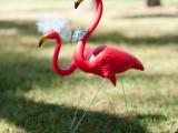whimsy-and-cheerful-flamingo-wedding-theme-ideas-19